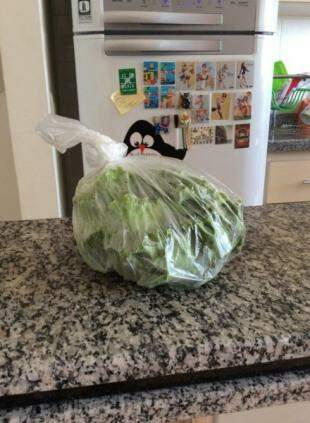 Para a salada: compre uma vez na semana e estoque-os de maneira correta.