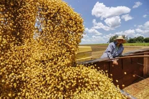 MS pode ter maior queda de produtividade de soja do país, aponta Conab