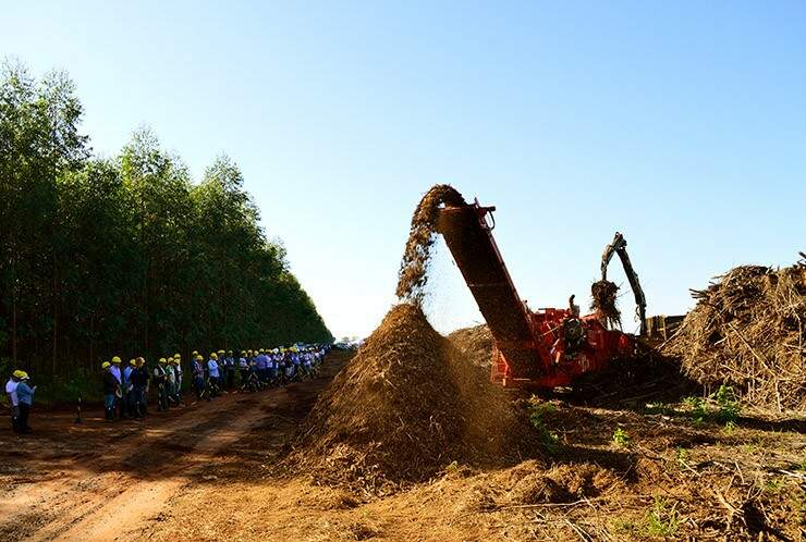 O processo que resultará na produção de energia elétrica, a partir de processamento de troncos, raízes, galhos e folhas do eucalipto foi acompanhado por mais de 160 pessoas. (Foto: Assessoria/Senar)