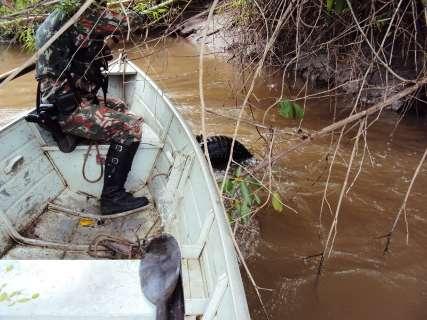 Em local de pesca proibida, jacaré de dois metros fica preso a anzol de galho