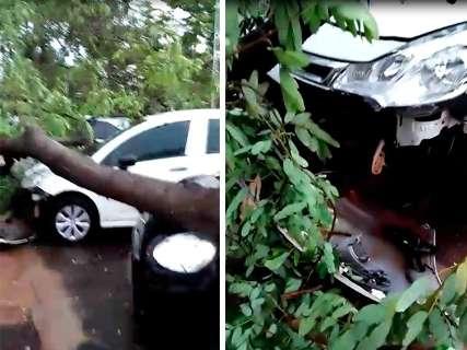 Árvores caem por toda a cidade, uma delas sobre 5 carros na UFMS