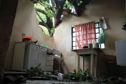 Chuva de 28 milímetros com ventos de 74,6 derrubou 12 árvores na cidade
