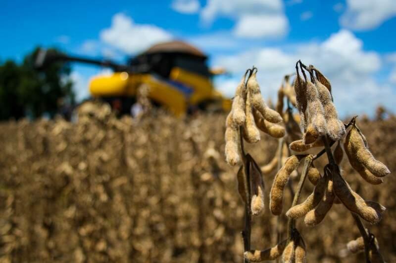 Área de cultivo de soja em MS, que na safra passada era de 1,9 milhões de hectares, agora alcança 2,1 milhões de hectares (Foto: Arquivo/Marcos Ermínio)