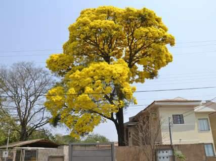Campo Grande é capital mais arborizada do País, aponta IBGE