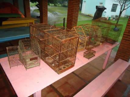 Em Três Lagoas, PMA multa homem em R$ 4 mil por criar aves sem autorização