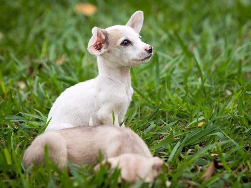 Confira como você pode ajudar animais em situação de risco.