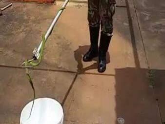 Serpente capturada pelos policiais (Foto:Divulgação)