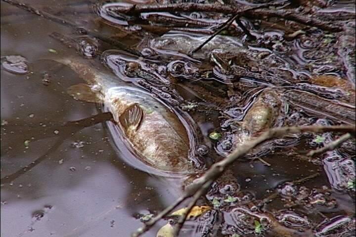 Além do produto poluente, o córrego está bastante sujo (Foto: Reprodução SBT MS)