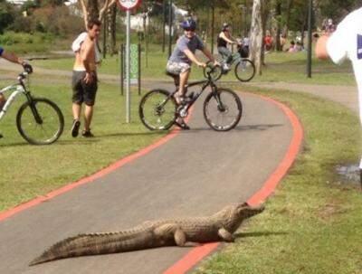 Jack ficou famoso após ser fotografado passeando na ciclovia do parque Barigui. (Foto: reprodução/Facebook)