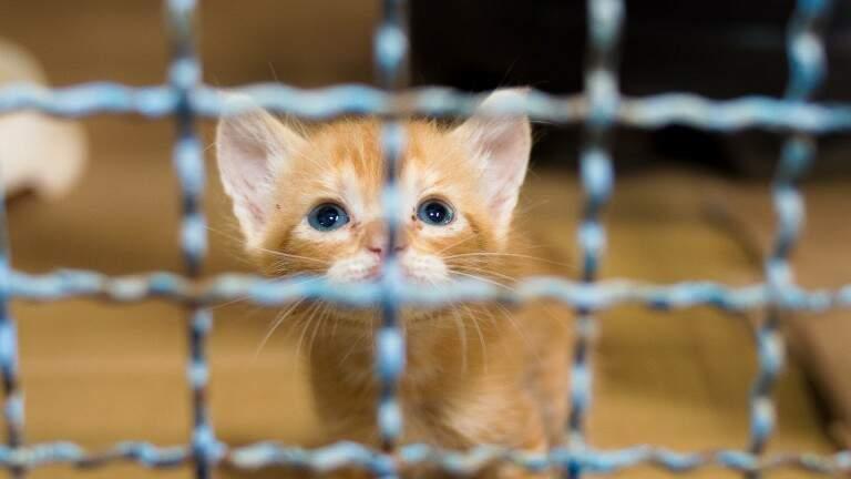 Centro funciona no feriado prolongado e tem animais para adoção. (Foto: Elivelton Almeida)