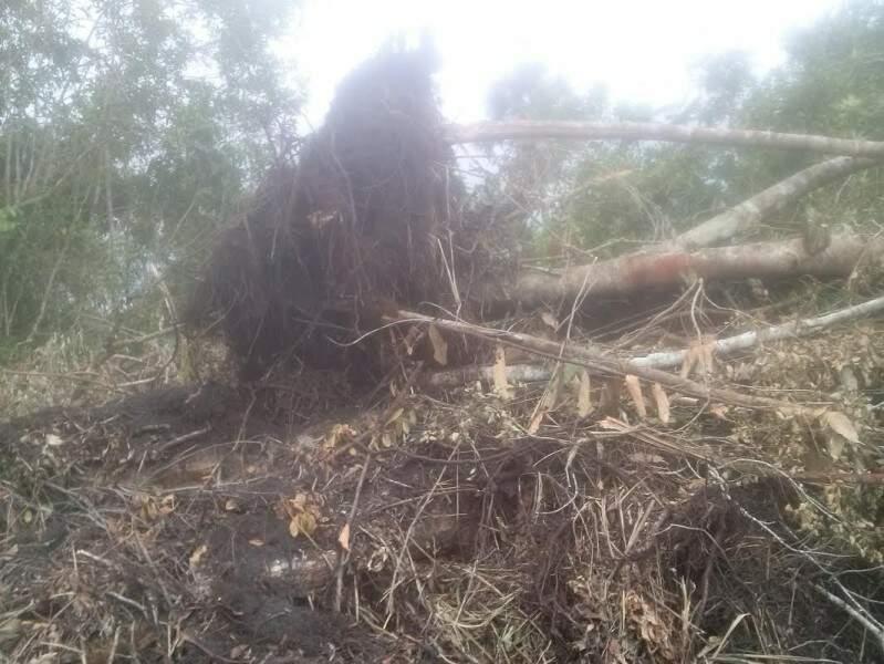Administrador da fazenda terá que apresentar plano de recuperação da área (Foto: Divulgação/PMA)