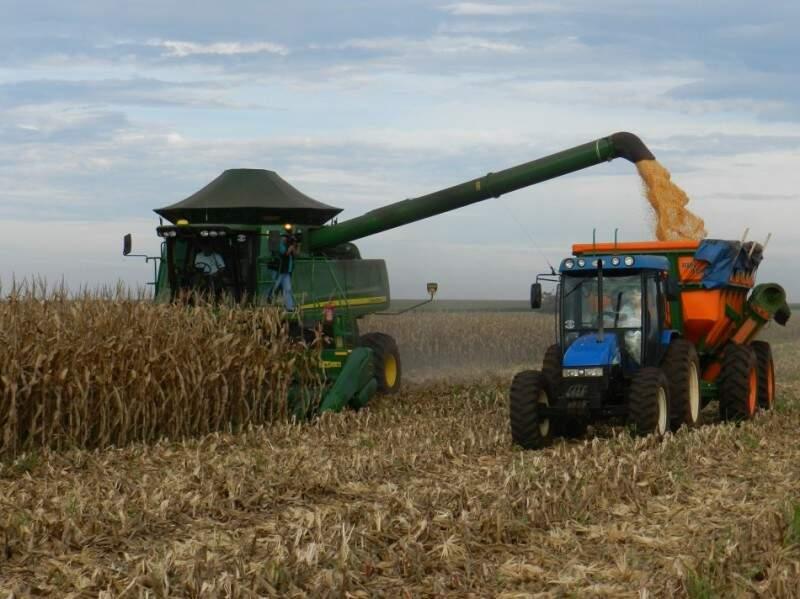 Produção de milho em Mato Grosso do Sul, deve crescer 43% na safra 2017. (Foto: Famasul)