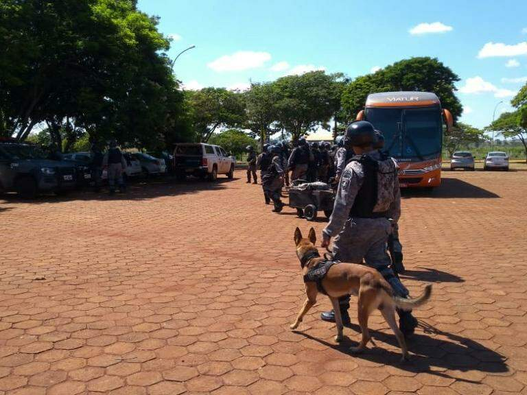 Cão ferejador utilizado na ação dentro do presídio (Foto: Adilson Domingos)