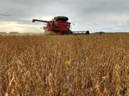 Importação recorde de soja na China gera expectativa de mercado para MS