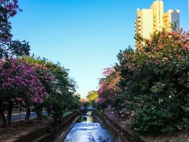 Tempo amanheceu com céu azul de brigadeiro (Foto: Marina Pacheco)