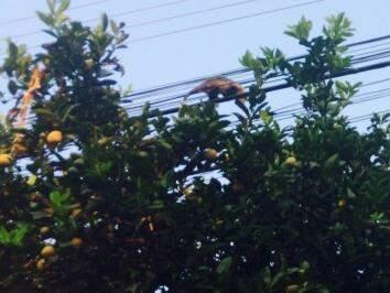O animal estava no bairro Santo Amaro, em Campo Grande. (Foto: Direto das Ruas)