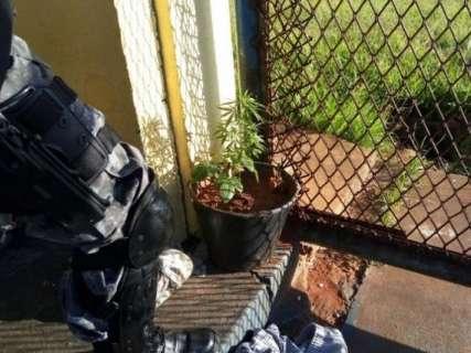 Policiais encontram até pé de maconha em corredor de presídio