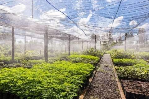 Plantio na área do Lageado abre comemorações pelo Dia do Meio Ambiente