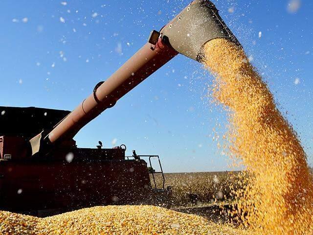 Em maio do ano passado, saca do milho era comercializada a R$ 48. Este ano, é vendida a R$ 21. (Foto: Famasul)