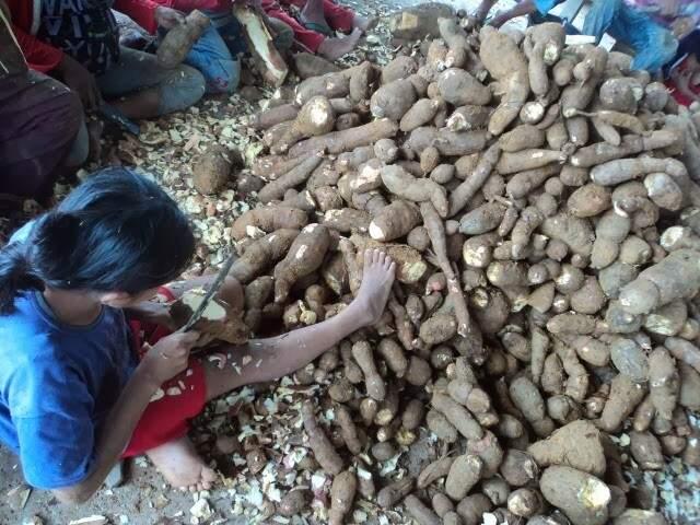 Índia descascando mandiocas para fabricação de farinha. (Foto: Nonato Silva/ Faro Fino)
