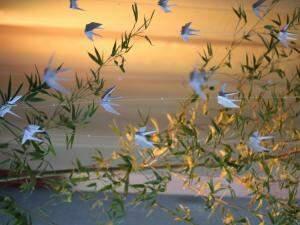 Planta decorada com os origamis. (Foto: Renan Kubota)