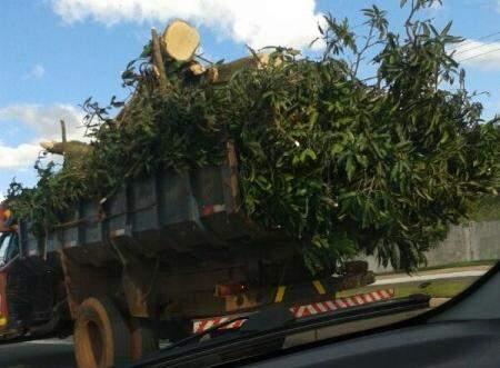Veículo transitava sem nenhuma proteção. (Foto: Repórter News)