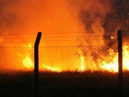 Curto circuito provoca incêndio em vegetação que abriga animais silvestres