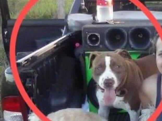 Cão ao lado de dona em foto divulgada nas redes sociais (Foto: Arquivo Pessoal)