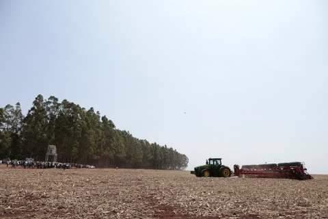 Próxima safra de soja deve ter ajuste e produção de 8,3 milhões de toneladas