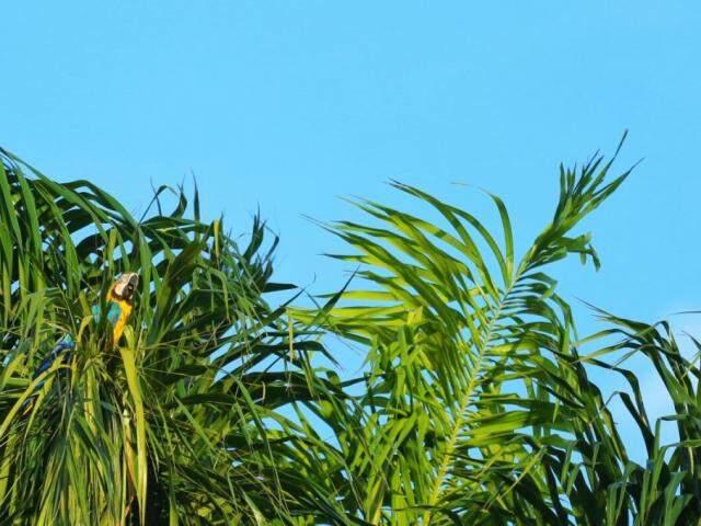 Registro do céu de Campo Grande. À esquerda, uma arara na vegetação. (Foto: André Bittar).