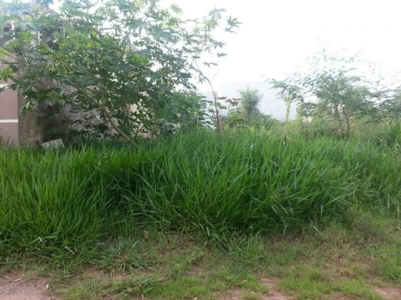 Na região há muitos terrenos abandonados com o mato muito alto, o que facilita a proliferação dos bichos. (Foto: Direto das Ruas)