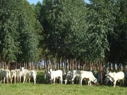 Plantio de árvores pode recuperar área degradada e ainda gerar lucros