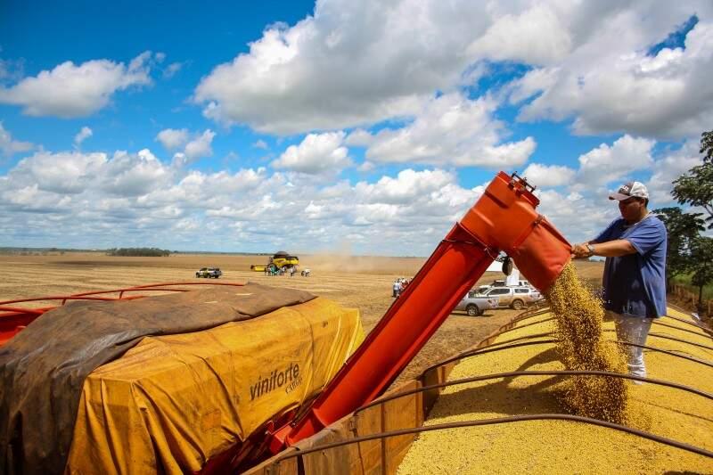 Soja registrou crescimento de 9,7% na produção, o equivalente a R$ 6 bilhões (Foto: Marcos Ermínio)