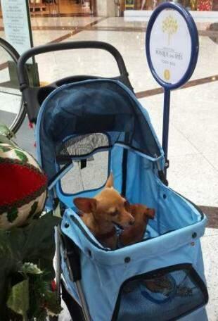 Pet tem tratamento VIP em shopping.