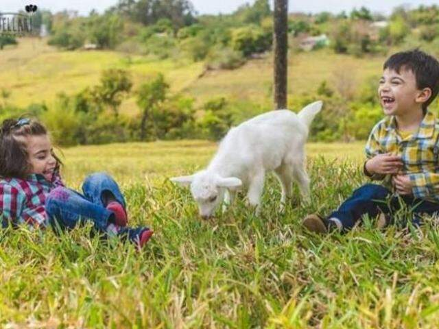 As crianças se divertem com o filhote de cabra (Foto: Sítio Harmonia)