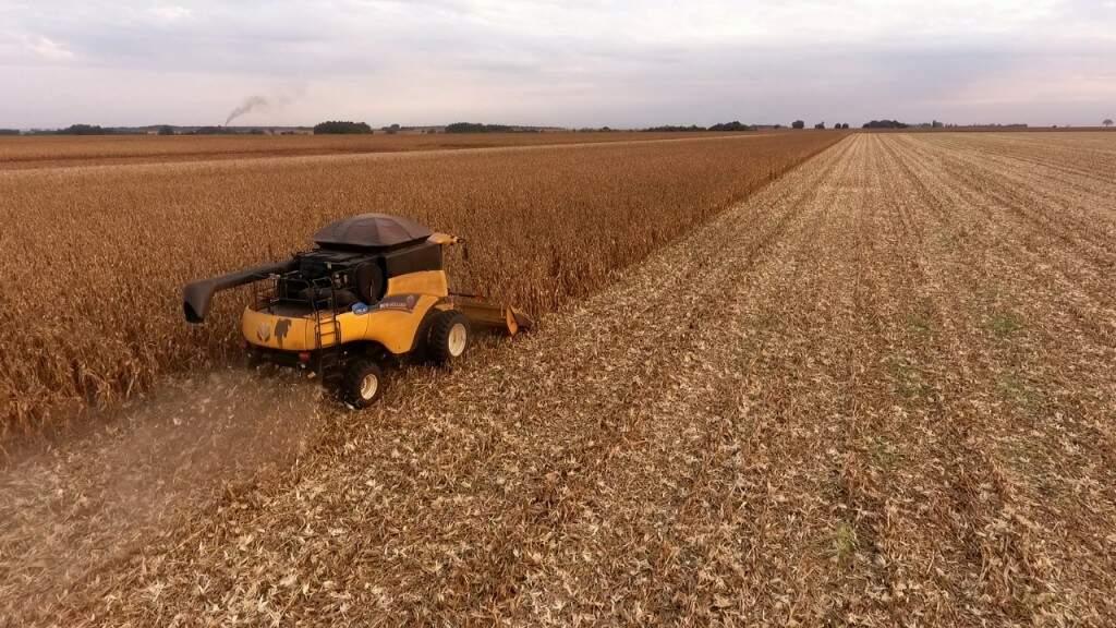 Antes da quebra provocada pelo clima neste ano, produção de milho cresceu 62% em MS em 2017 (Foto: Eliel Oliveira)