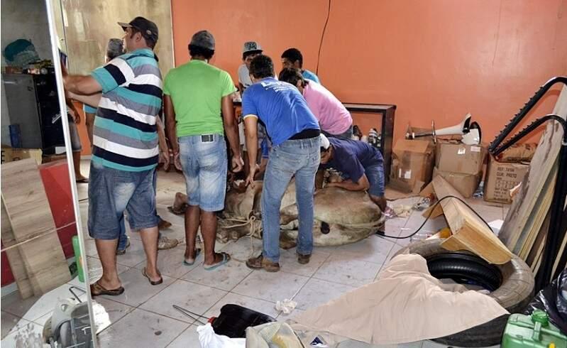 Após fugir do transporte em que estava, boi entra na loja e causa prejuízo de R$ 1,2 mil (Foto: Site Idest)
