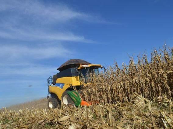 Colheita de milho em MS (Foto: Divulgação/Famasul)