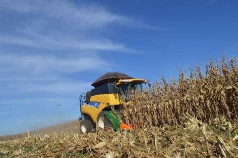 Com safra recorde de milho, produção de MS é avaliada em R$ 28,3 bilhões