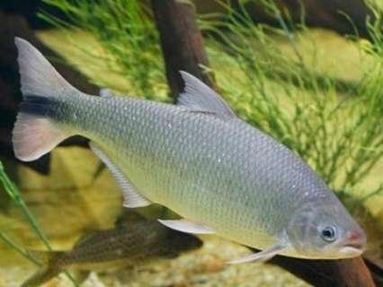Mulher é multada em R$ 5 mil por pesca de exemplar de peixe em extinção
