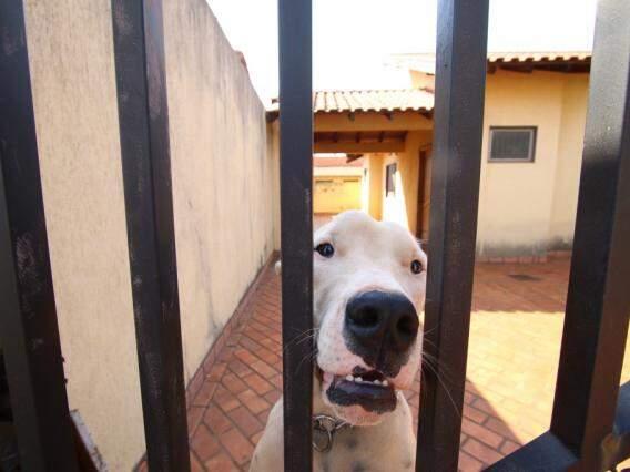 Cadela está em casa vazia há uma semana sem alimento, segundo vizinhos (Foto: André Bittar)