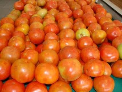 Cesta básica fica R$ 10 mais barata com queda no preço do tomate e feijão