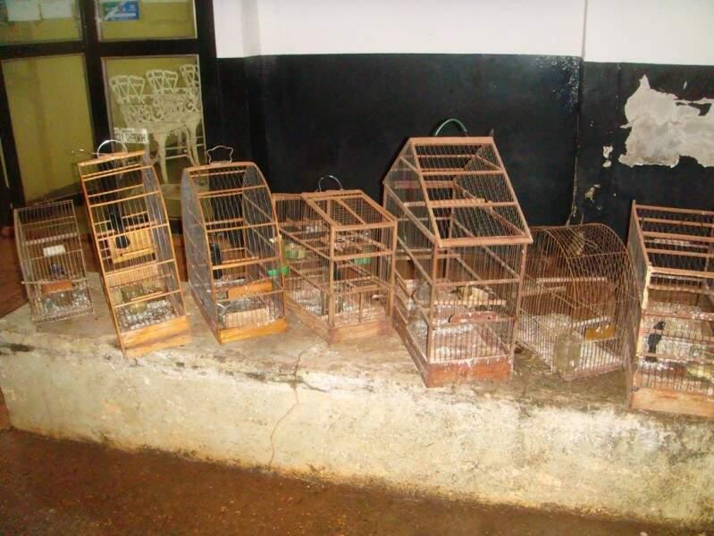 Sete pássaros foram apreendidos com homem acusado de violência doméstica (Foto: PMA)