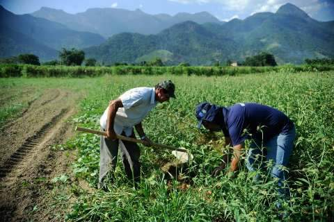 Na safra de grãos deste ano, órgão estima redução de 5,5%