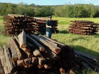 No total, volume corresponde a cargas de seis carretas bitrens (foto: Divulgação/Ibama)