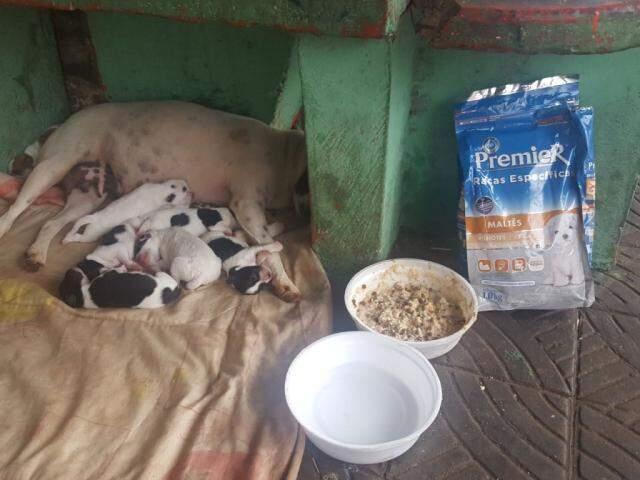 Os cachorrinhos ganharam um pacote de ração e um pote de água. (Foto: Direto das Ruas)