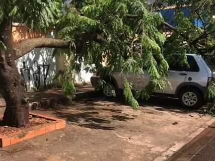 Chuva com ventos fortes derruba árvores em cima de carros