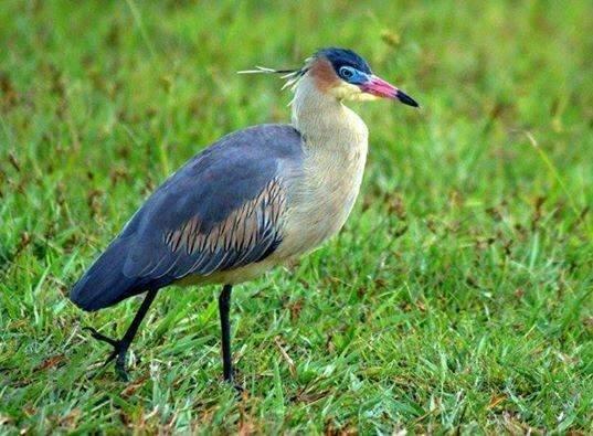 Observação de aves vira atrativo no Estado e chama turistas estrangeiros