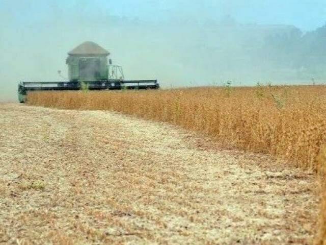 Safra de soja terá aumento na produtividade este ano