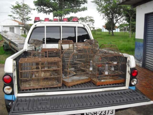 Os 16 pássaros eram criados em gaiolas e sem autorização ambiental. (Foto: Divulgação)